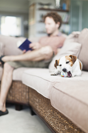 omnivores: Dog chewing toy on sofa LANG_EVOIMAGES