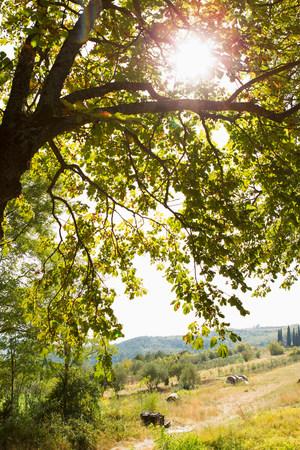 Sunlight shining through trees LANG_EVOIMAGES