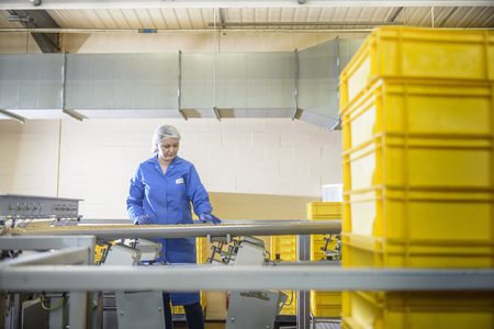 biscuits: Worker checking production line in factory