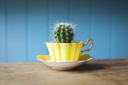 advances: Cactus growing in teacup on desk