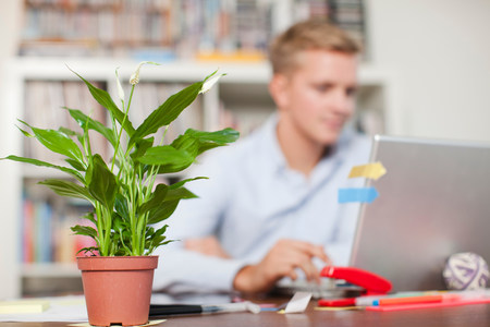 Young man at desk with pot plant in foreground LANG_EVOIMAGES