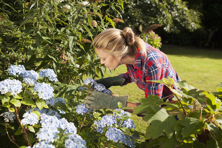Woman pruning flowers in garden LANG_EVOIMAGES