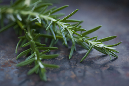 leafed: Close up of rosemary leaves