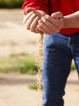 Farmer pouring handful of barley seeds LANG_EVOIMAGES