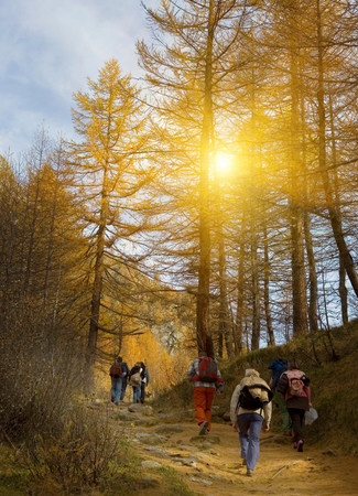 Group of mature and senior men and women hiking in forest LANG_EVOIMAGES
