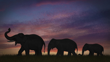 pursued: Silhouette of elephants against sky LANG_EVOIMAGES