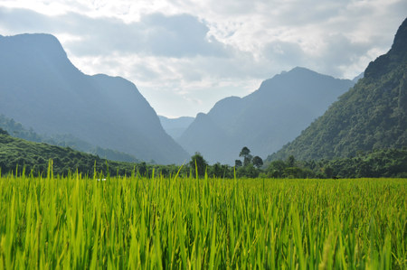 leisurely: Paddy field,Laos
