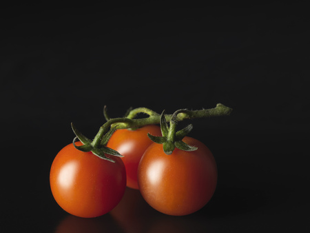 uncomplicated: Close up of tomatoes on vine