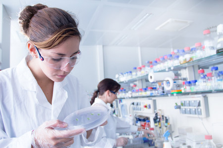 engrossed: Biology student looking at petri dish LANG_EVOIMAGES