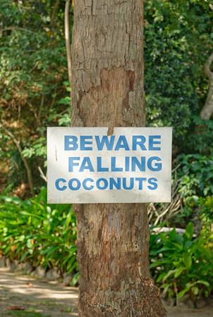 close up food: Beware of falling coconuts sign,Yasawa island group,Fiji,South Pacific islands