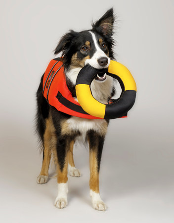 Border Collie with lifebuoy in mouth LANG_EVOIMAGES