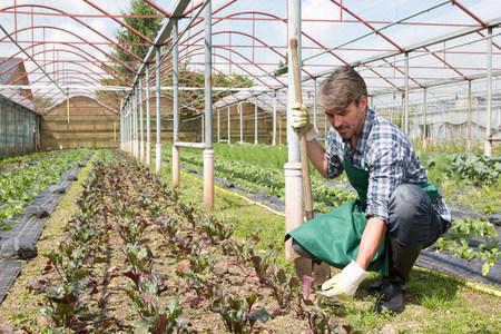 Organic farmer tending young plants