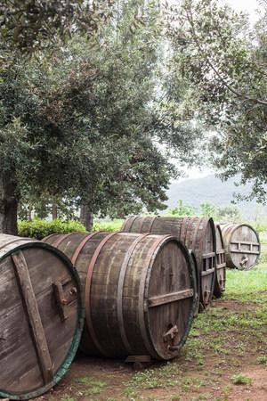 Wooden barrels and olive trees near Marciana,Elba Island,Italy