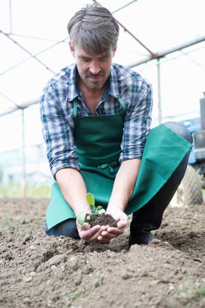 checker: Organic farmer holding seedling in polytunnel