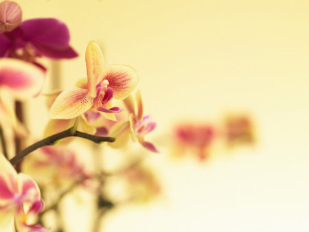 frailty: Stem of orchids