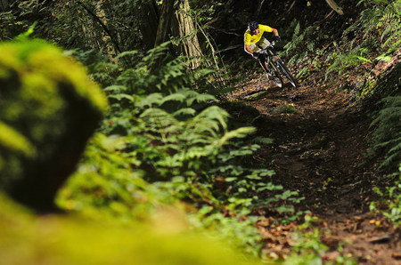 Man mountain biking through forest LANG_EVOIMAGES