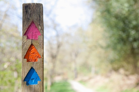 Colourful direction arrows in forest
