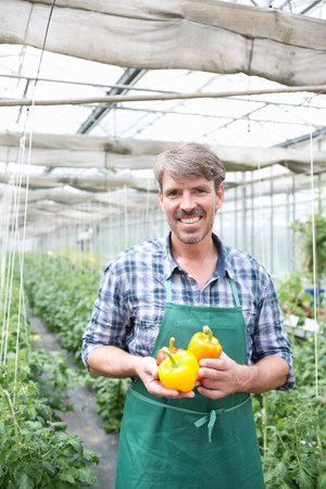farmyards: Portrait of organic farmer holding yellow peppers