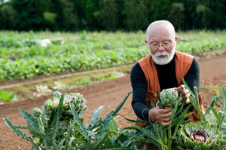 65 69 years: Senior man looking at artichoke in field