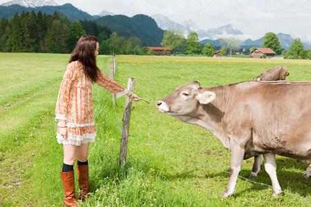 Woman feeding cow, Bavaria, Germany