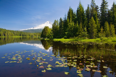mt hood national forest: Mount hood and trillium lake