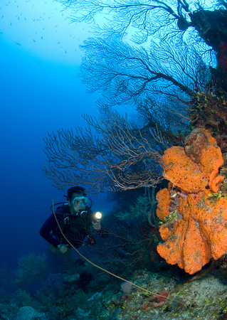 Coral reef scene with diver. LANG_EVOIMAGES