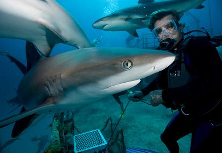new age: Shark feeding dive.