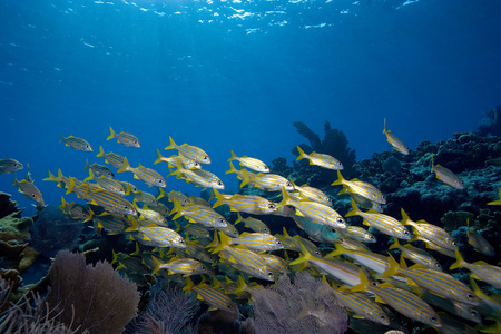 purples: Schooling fish on reef crest.