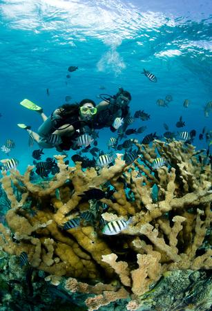 elkhorn coral: Divers and Elkhorn coral.