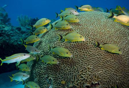 Fish huddled near brain coral. LANG_EVOIMAGES