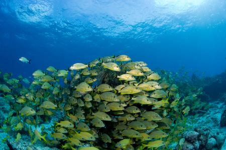 Mass of schooling fish. LANG_EVOIMAGES