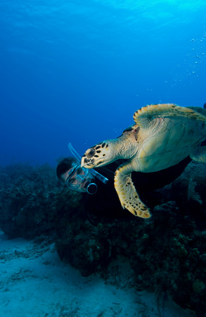 Diver with turtle.