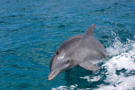 quizzical: Swimming dolphin.