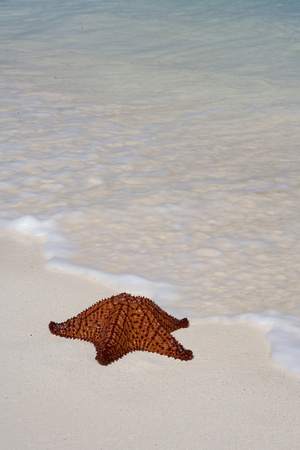 Sea star on beach. LANG_EVOIMAGES