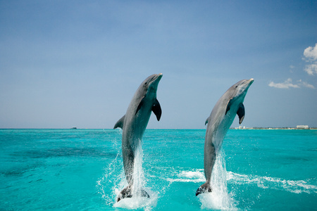 bottlenose: Dolphin in unison.