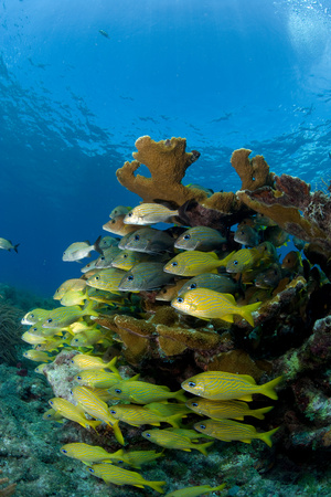 Fish and Elkhorn coral.