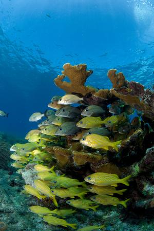elkhorn coral: Fish and Elkhorn coral.