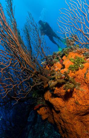 Diver behind sea fan and sponge. LANG_EVOIMAGES