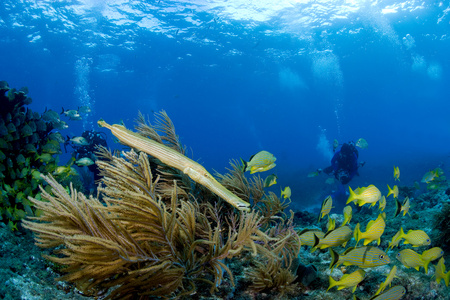 the americas: Marine life on coral reef.