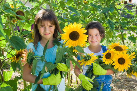 Girls and sunflowers LANG_EVOIMAGES