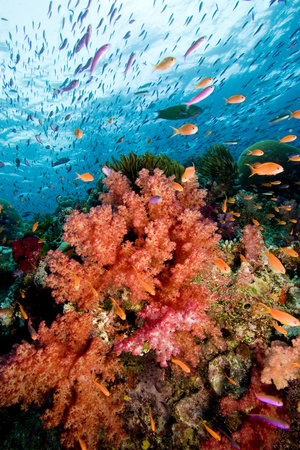Reef scene. LANG_EVOIMAGES