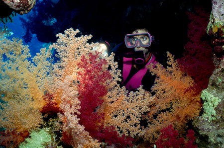 Scuba diver and soft corals.