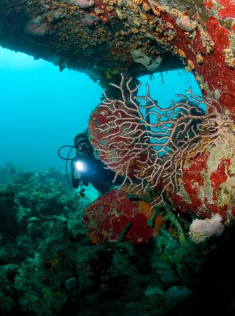 Diver near ships propeller.