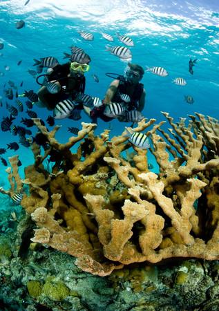 elkhorn coral: Snorkelers and elkhorn coral. LANG_EVOIMAGES
