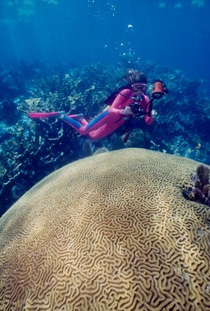 Diver with large brain coral.