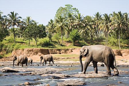 Elephants walking through watering hole
