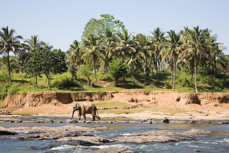 plains indian: Elephant walking past watering hole