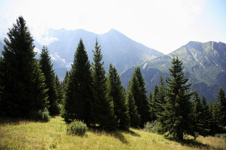 Conifers and mont blanc LANG_EVOIMAGES