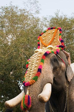 varkala: Elephant dressed for hindu carnival