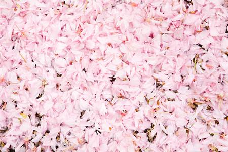 cropped shot: Pink petals